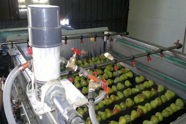 Lavado y desinfección de frutas y vegetales